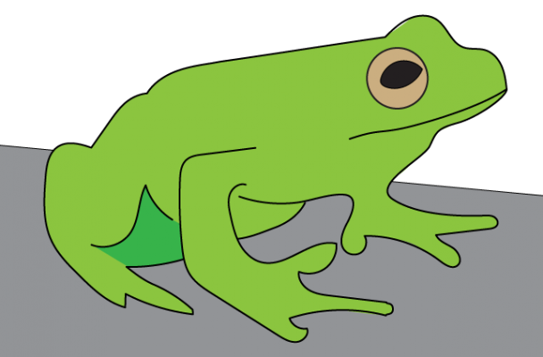 A cute little green frog.